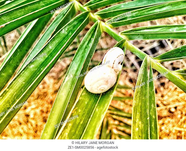 Two snails on palm leaf