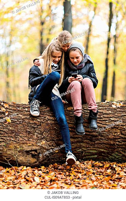Girls using smartphone on tree trunk in autumn forest