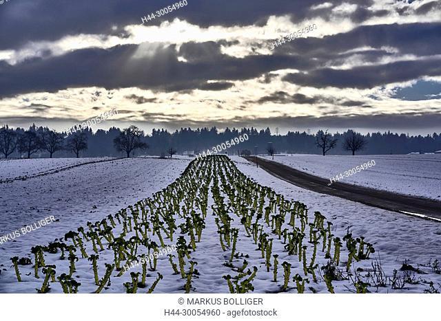 Scenery, agrarian scenery, field, field
