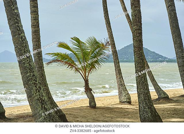 Landscape of Clifton Beach with coconut palms in spring, Queensland Australia