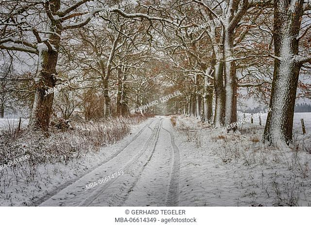 Avenue, trees, HDR, snow, district of Beberbeck in the Solling