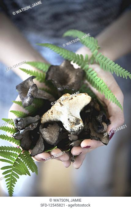 A hand filled with wild mushrooms and fern leaves