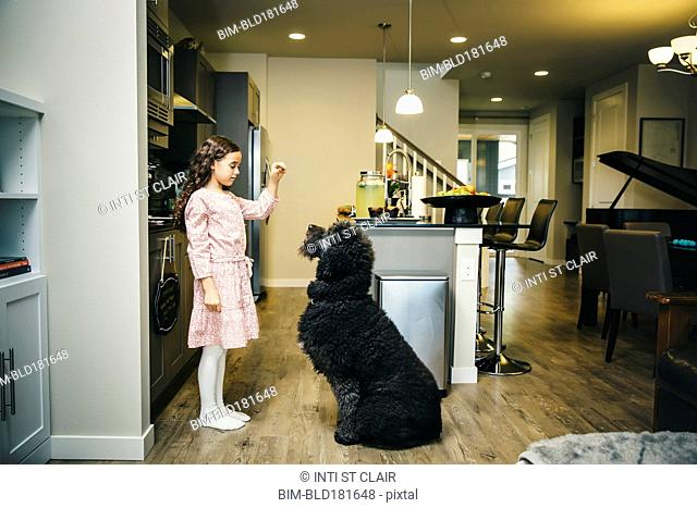 Mixed race girl training dog in kitchen