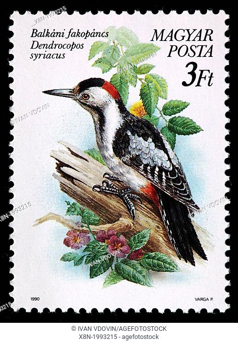 Syrian Woodpecker Dendrocopos syriacus, postage stamp, Hungary, 1990