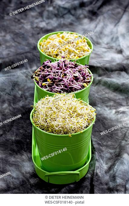 Various sprouts in container, close up
