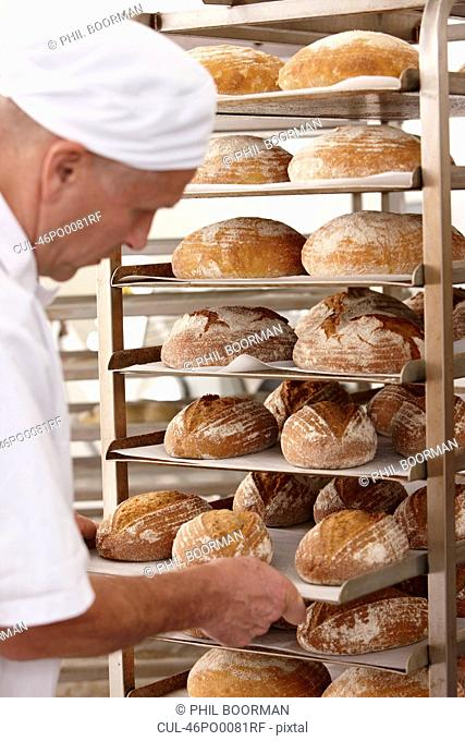 Chef putting tray of bread on rack