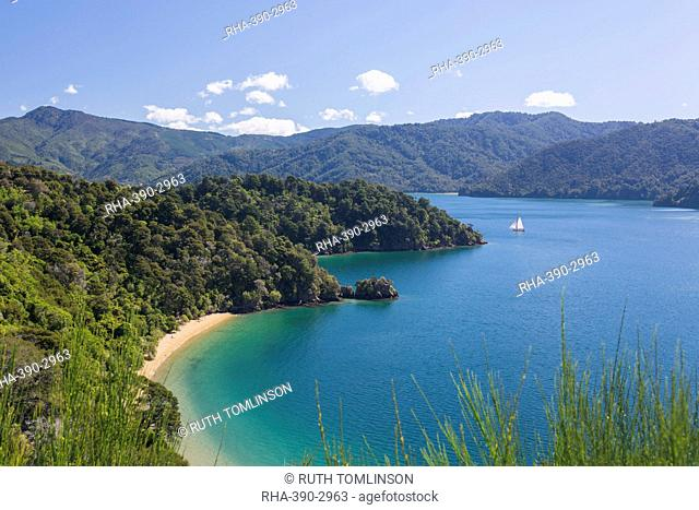View over Governors Bay and Grove Arm, Queen Charlotte Sound (Marlborough Sounds), near Picton, Marlborough, South Island, New Zealand, Pacific