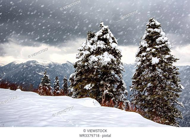Tibet nyingchi snow