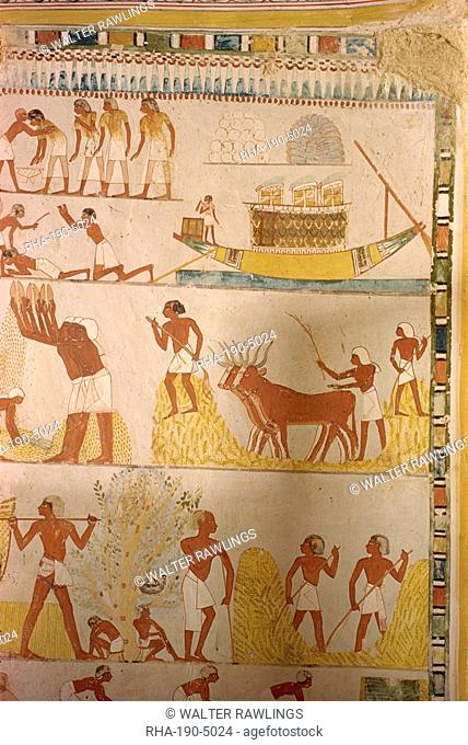 Harvesting scene from the time of the 18th Dynasty land steward Sheikh Aba el Kurna, Tomb of Menna, Thebes, UNESCO World Heritage Site, Egypt, North Africa