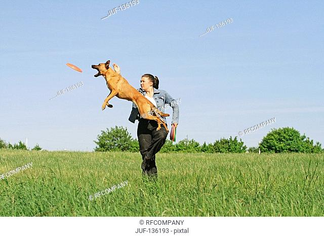 woman playing with half breed dog Malinois on meadow