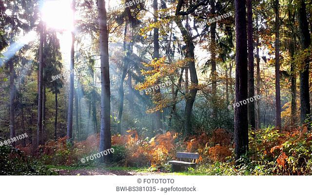 sun shining through autumnal forest, Germany, North Rhine-Westphalia, Ruhr Area, Witten