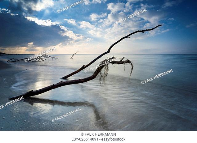 baltic sea in evening light and long exposure, setting sun irradiated branches and stones in sea water troubled sea and foaming waves on the shore