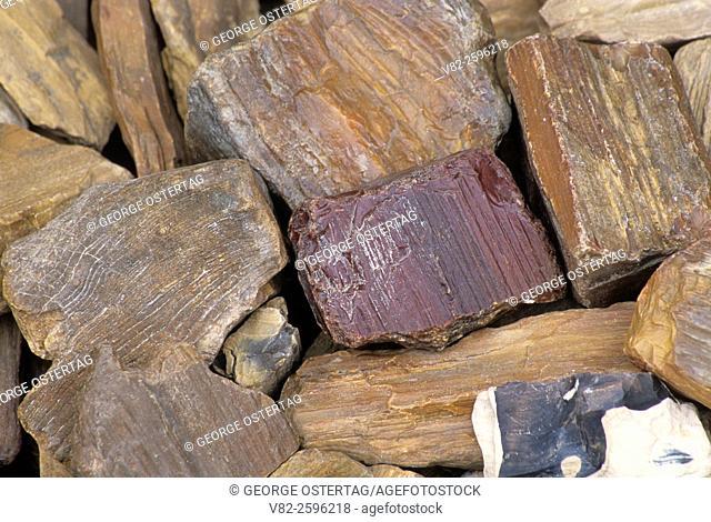 Crabtree Creek petrified wood, Linn County, Oregon