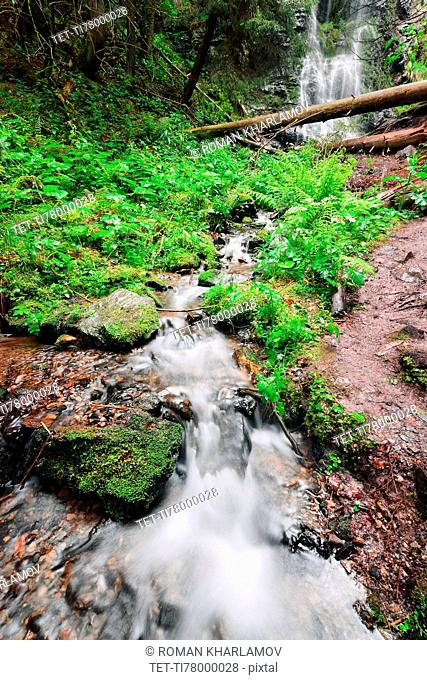 Ukraine, Zakarpattia, Rakhiv district, Carpathians, Stream with waterfall in forest