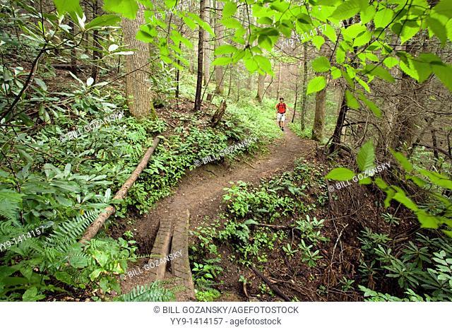 Hiker on North Slope Trail - Pisgah National Forest, near Brevard, North Carolina, USA