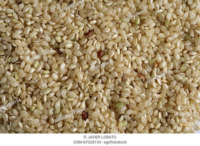 Round grain integral rice