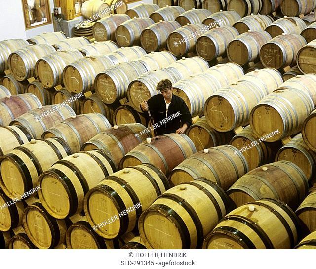 Man testing wine, Buitenverwachting, Constantia, S  Africa