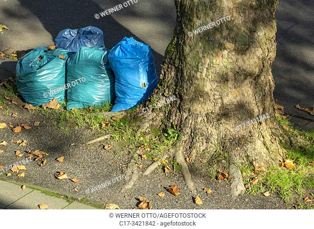 Oberhausen, Sterkrade, plastic bags at the roadside near a plane tree, binbags with autumn leaves, refuse management, trash removal, street cleaning