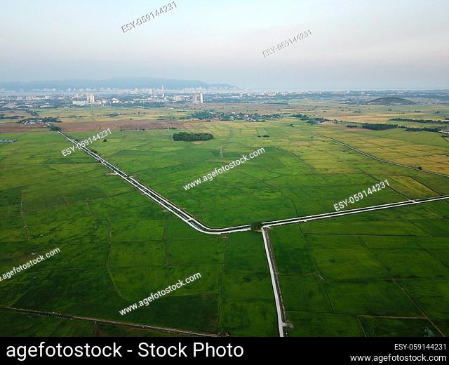 Aerial beautiful green image paddy field