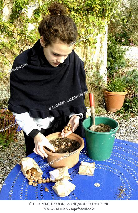 Crocus Bulbs planting in pot in autumn