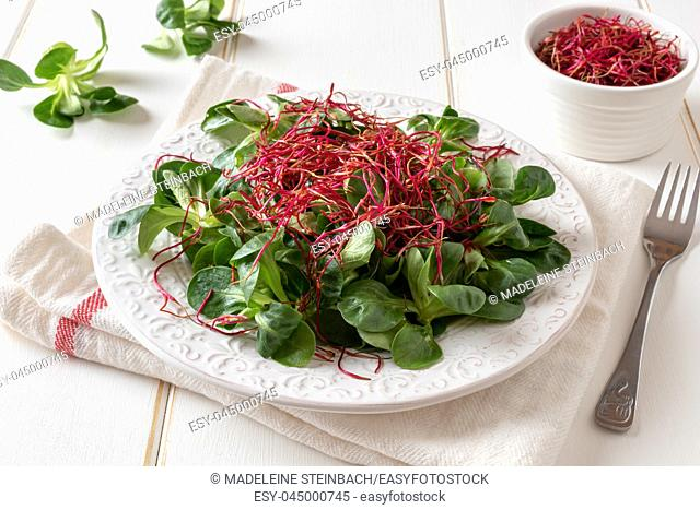 Salad with lamb's lettuce and fresh red beet sprouts on a white background
