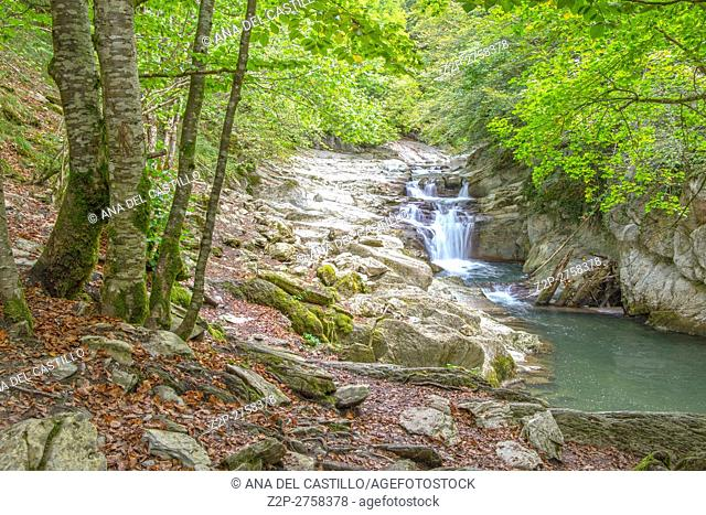Autumn forest Selva de Irati fall beech jungle in Navarra Pyrenees of Spain Cascade