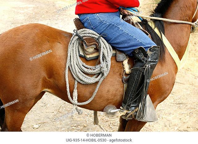 Chilean Horseman, Huaso