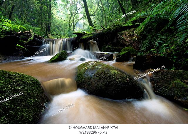 Landscape photo of a stream in a dense green forest. Debengeni Falls, Magoebaskloof, Limpopo, South Africa