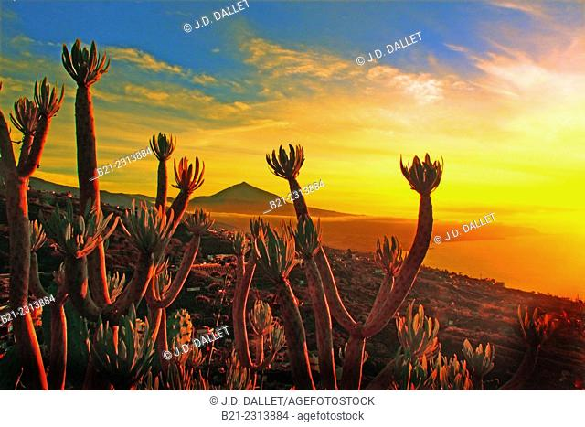 Teide volcano from El Sauzal, Tenerife, Canary Islands, Spain