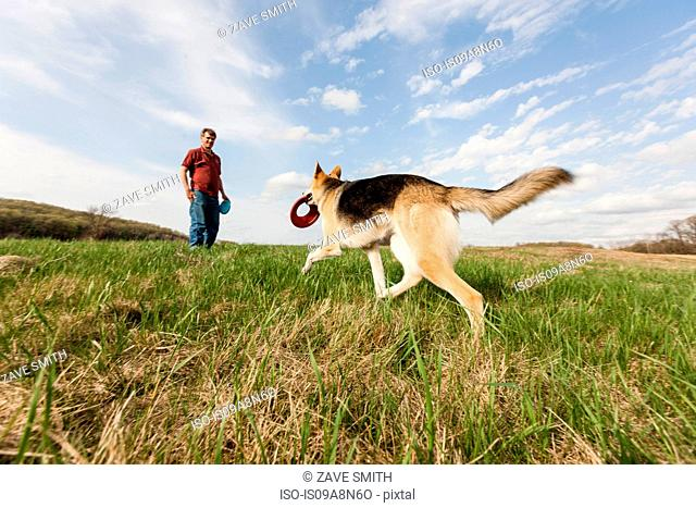 Man training alsatian dog with frisbees