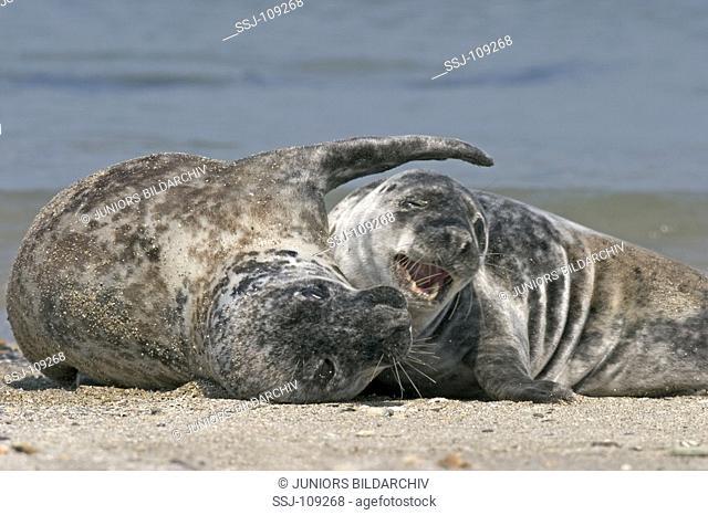 animal,seal