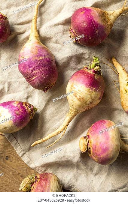Raw Organic Purple and White Turnips Ready to Cook