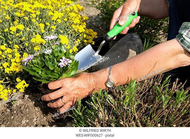 Germany, Woman planting flowers in garden