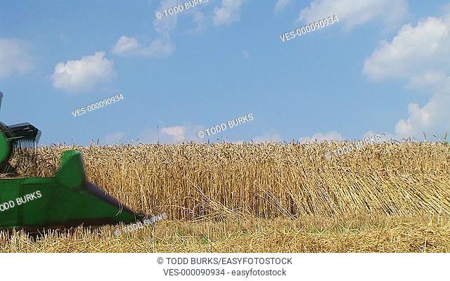 Combine harvesting wheat crop