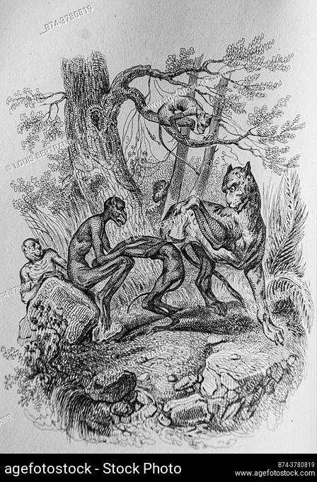 the monkeys and the leopard, florian fables illustrated by victor adam, publisher delloye, desme 1838