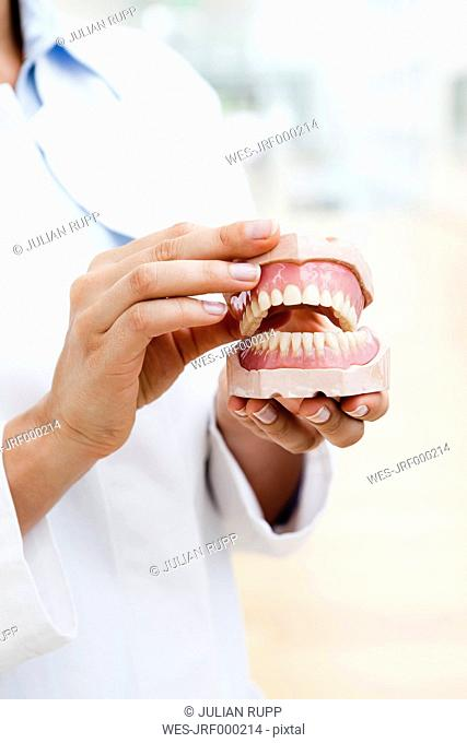 Germany, Bavaria, Diessen am Ammersee, Young doctor exhibiting dentures, close up