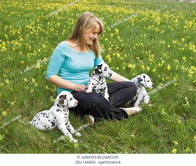 young woman and Dalmatian dog puppies on meadow