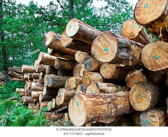 French timber