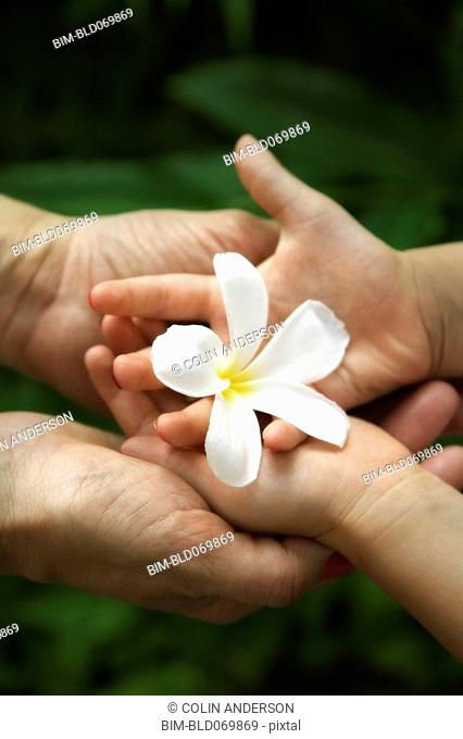 Father and child holding frangipani flower