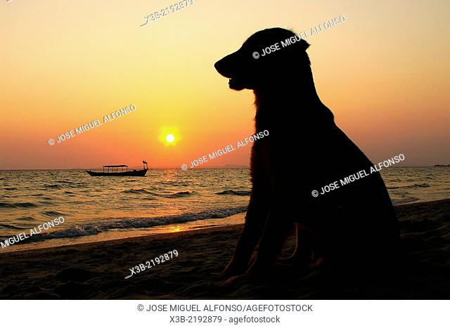 Dog in a beach. Sunset in Otres beach, Sihanoukville, Cambodia