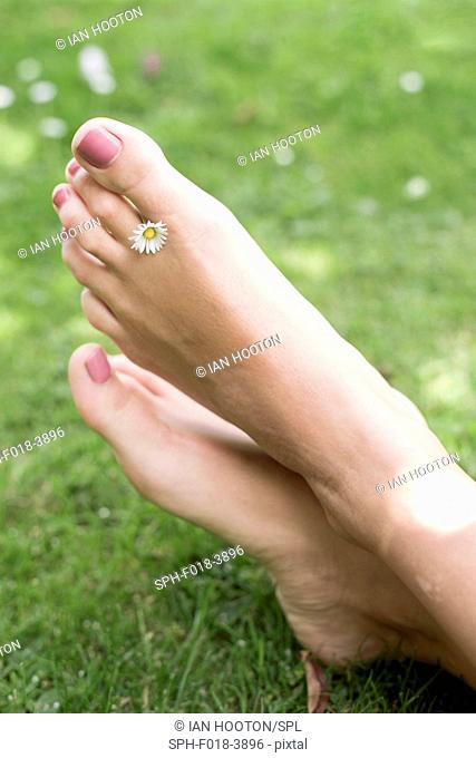MODEL RELEASED. Young woman on grass with daisy between toes