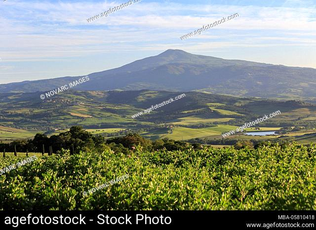 The landscape of the Val d'Orcia, Tuscany, Italy