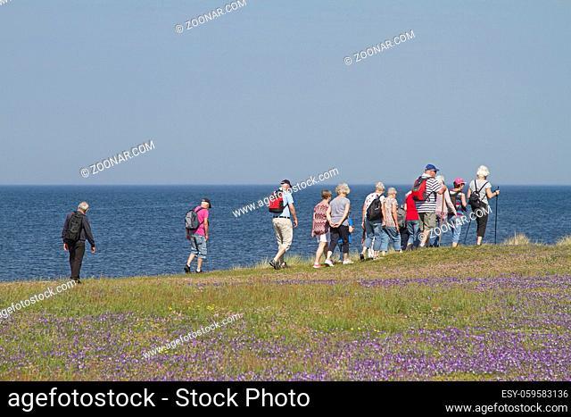 Viele Naturliebhaber wandern täglich durchs Naturreservat Morups Tange an der schwedischen Nordseeküste und erfreuen sich an der Flora und Fauna dieses Gebietes