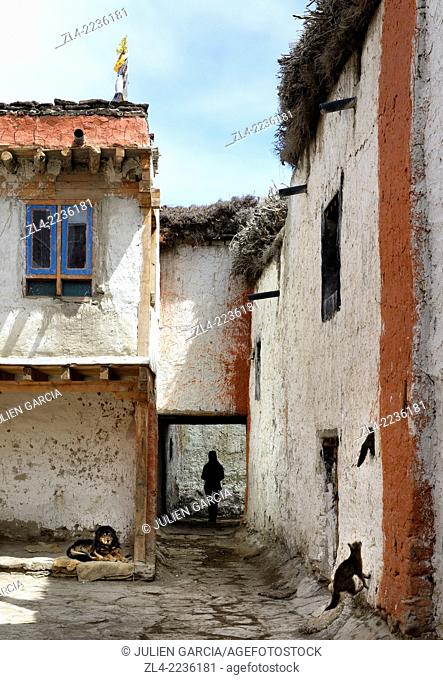 Dog, cats and silhouette of a woman in a street of the walled city of Lo Manthang, the historical capital of the Kingdom of Lo
