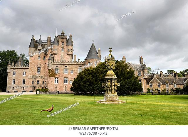 Front lawn of Glamis Castle childhood home of Queen Mother with wild Ring-necked Pheasant and The Great Sundial Scotland UK