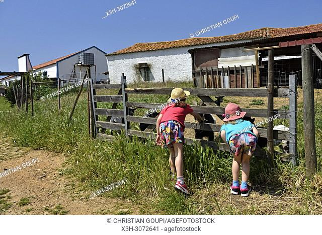 children discovering the animals of the farm close to the Terra do Sempre guesthouse near Grandola, Alentejo region, Portugal, southwertern Europe