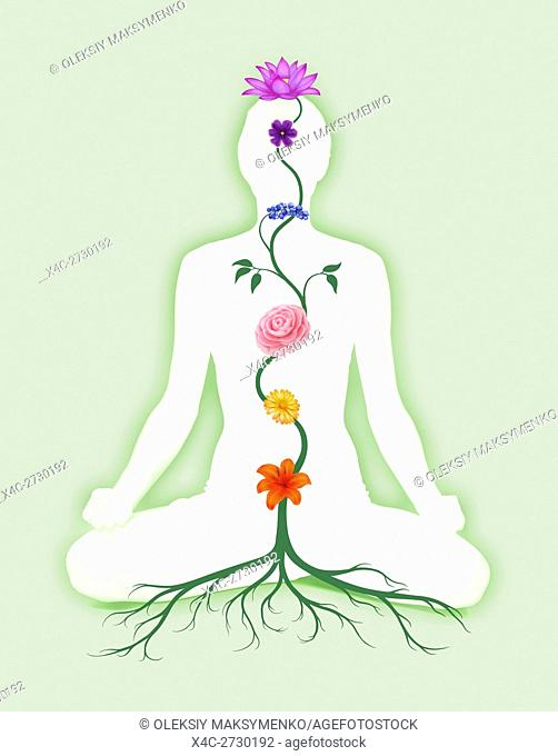 Woman sitting in lotus pose with seven chakra symbols represented as associated with chakras flowers and colors growing from a root chakra isolated on green...