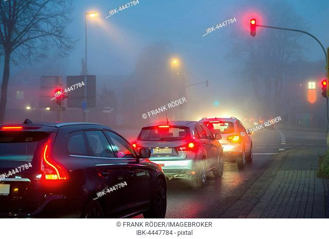 Cars at a red light in fog at night, traffic, Grevenbroich, North Rhine-Westphalia, Germany