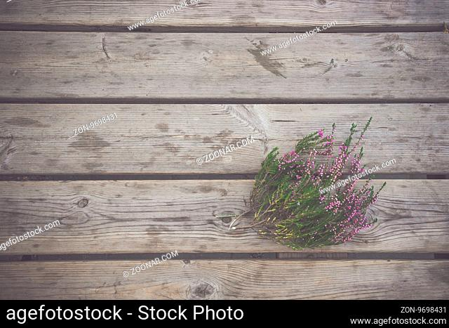 Heather plant with purple flowers on a wooden background