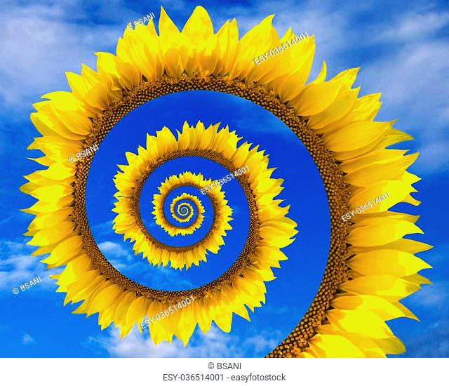 Abstract sunflower spiral and blue sunny sky with clouds